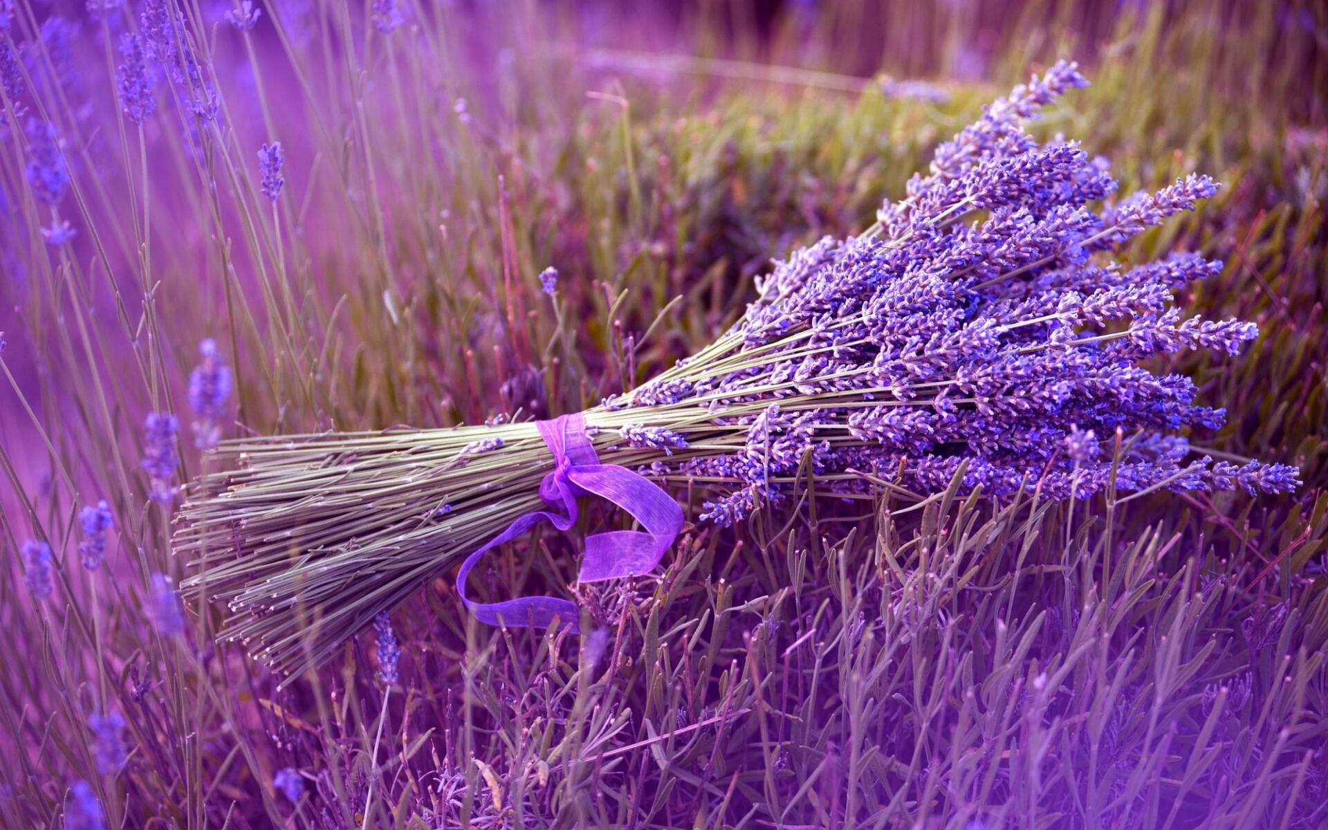 lavender-e896b0e8a1a3e88d89